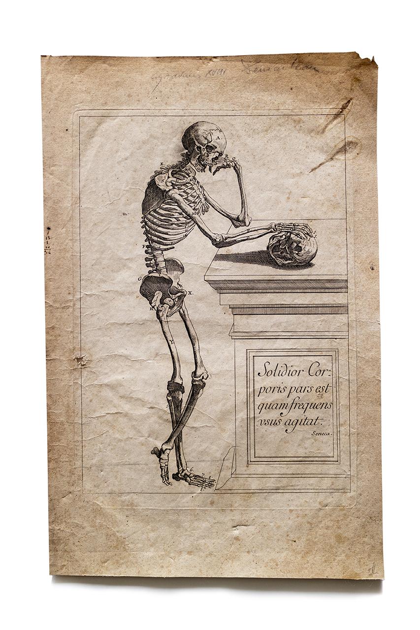 18th century 人体骨格イラスト